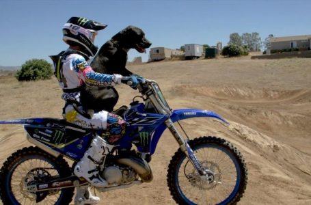 FMX: A dog with a Yamaha 250 yz 😲🐶🐩